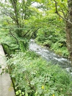 軽井沢の渓流の写真・画像素材[2924717]
