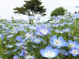 自然の写真・画像素材[112208]