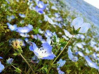 自然の写真・画像素材[112214]
