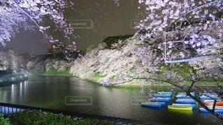 春の写真・画像素材[113613]
