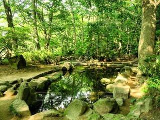 自然の写真・画像素材[118868]