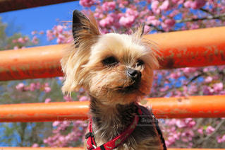 犬の写真・画像素材[124741]