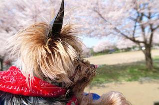 犬の写真・画像素材[124754]