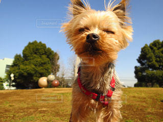 犬の写真・画像素材[124759]