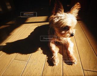 犬の写真・画像素材[124763]