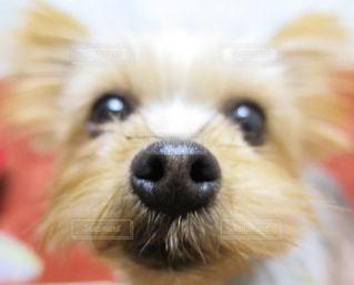 犬の写真・画像素材[124767]