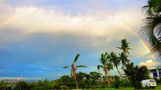 rainbow - No.127126