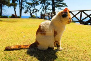 猫の写真・画像素材[128186]