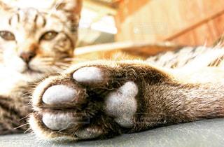 猫の写真・画像素材[128190]