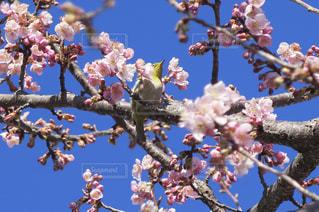 春 - No.340233