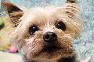 犬の写真・画像素材[356848]