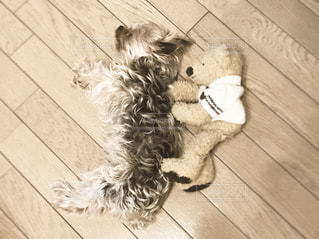 犬の写真・画像素材[394697]