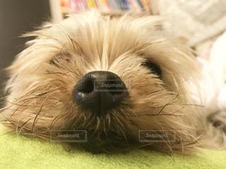 犬の写真・画像素材[394698]