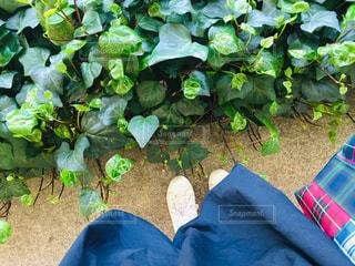 庭のクローズアップの写真・画像素材[3050585]