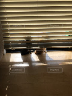 見張り中の猫の写真・画像素材[2926060]
