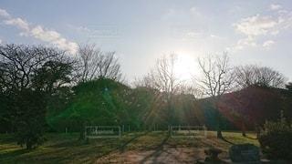畑の真ん中にある木の写真・画像素材[2927297]
