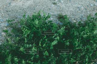 茂みと木のグループの写真・画像素材[3554100]