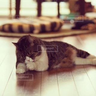 猫の写真・画像素材[117800]