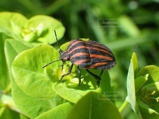 自然の写真・画像素材[112824]