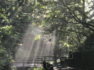 早朝の木漏れ日の写真・画像素材[3741412]