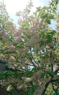 木の枝に花瓶の写真・画像素材[3202314]