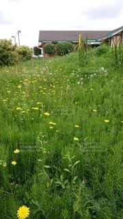 草の中の黄色い花の写真・画像素材[3205753]