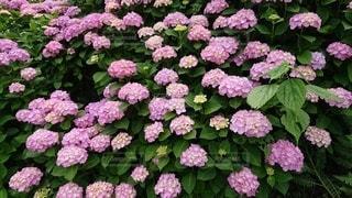 花園のクローズアップの写真・画像素材[3343837]