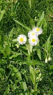 花のクローズアップの写真・画像素材[4374210]