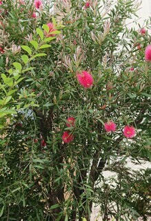 散歩中に見つけた植物の写真・画像素材[4545610]