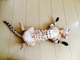 ブランコに横たわる犬の写真・画像素材[3000200]