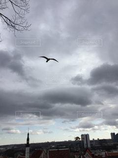 曇りの日に空を飛んでいる鳥の写真・画像素材[2939507]