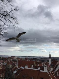 曇りの日に空を飛ぶ鳥の写真・画像素材[2939510]