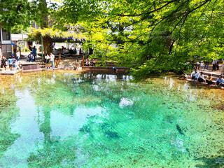 池の写真・画像素材[2949153]