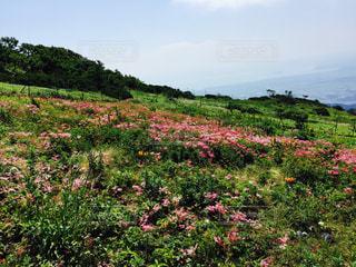 No.227020 花畑