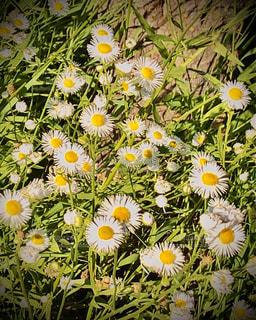 花の写真・画像素材[3069947]