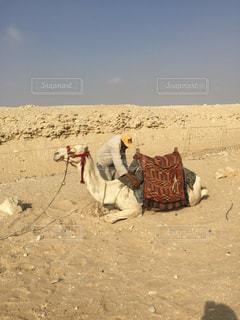 砂漠のラクダの写真・画像素材[3046353]