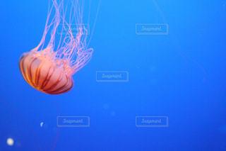 クラゲの写真・画像素材[900311]