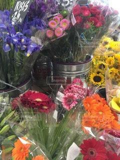 花の写真・画像素材[118748]