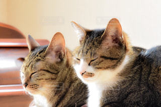 猫の写真・画像素材[137675]