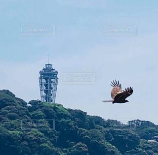 自由に飛ぶ江ノ島とんびの写真・画像素材[2963548]