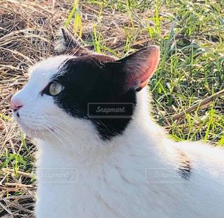空を見上げる猫の写真・画像素材[2963556]