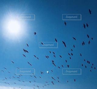 大海原の上を羽ばたく鳥達の写真・画像素材[2964972]