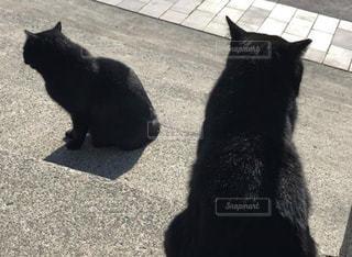 黒猫のそっくりさんの写真・画像素材[2967999]