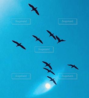 湘南の青空を飛ぶ鳥の写真・画像素材[2974320]