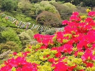 感動した鮮やかな風景の写真・画像素材[3094104]
