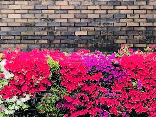 hometownの春の風景の写真・画像素材[3165840]