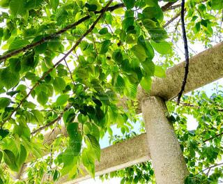 新緑の美しい近所の神社様の写真・画像素材[3196094]
