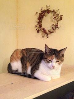 おさまり猫の写真・画像素材[118811]