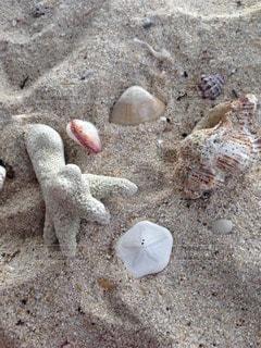 ビーチで発見の写真・画像素材[118812]