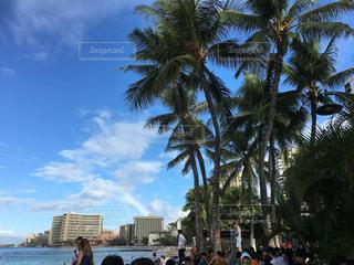 虹とヤシの木とビーチの写真・画像素材[2969837]